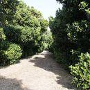 塩川御嶽とフクギ並木