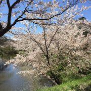 上田城 桜祭り