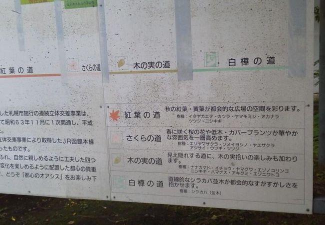 札幌桑園停車場緑道線 木の実の道