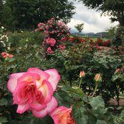 素晴らしい香りのバラ園