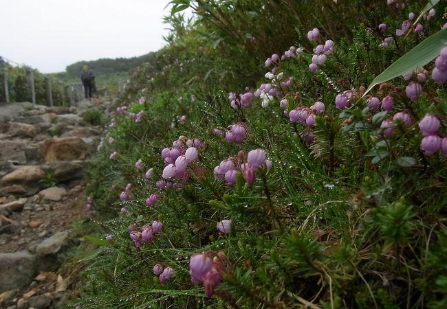 7月中旬、高山植物の宝庫