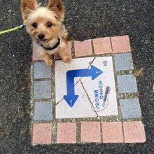 愛犬ジローもお散歩を楽しんでます。