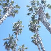 カリフォルニアらしい風景