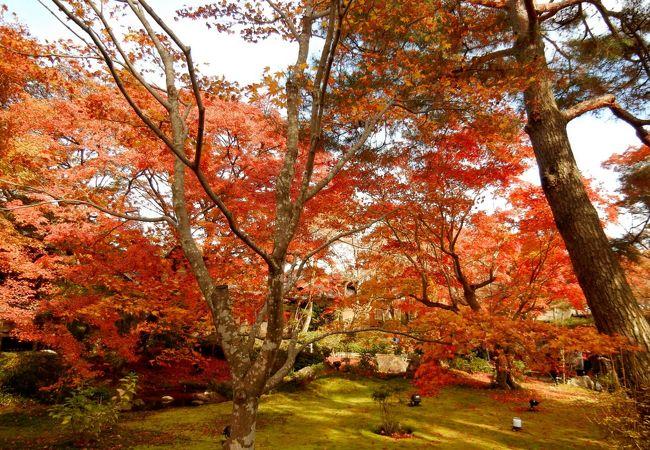 紅葉の宝厳院