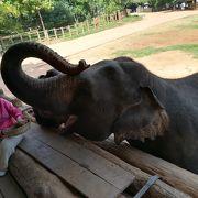 象と文字通り触れ合える施設