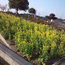 佐布里緑と花のふれあい公園 (梅っ花そうり)