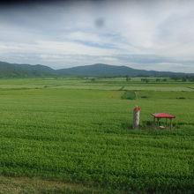 広大なそば畑の景観です