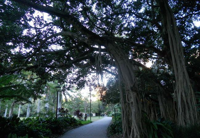 ブリスベン シティ ボタニック ガーデン