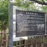 松林の公園
