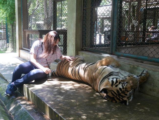タイガー キングダム (チェンマイ)