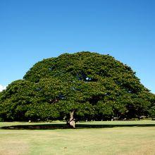 樹一本一本はホントに大きいです。