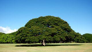 みんなご存知「日立の樹」!