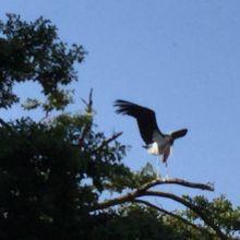 ターミナルの木にとまっていた強そうな鳥