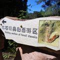 写真:澄江の化石発掘地