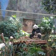 パンダにも会える広大なテーマパーク