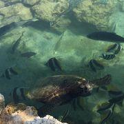 亀と熱帯魚の池