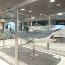展望台の室内にでかいサメが展示されてます。
