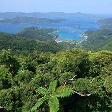奄美の海も山もとても美しかった!