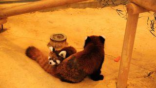 レッサーパンダの聖地は、西山公園の中に有ります