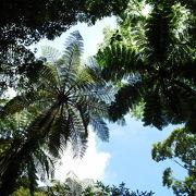 珍しい植物が見れる