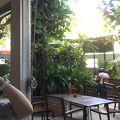 シーガル カフェ ハウス
