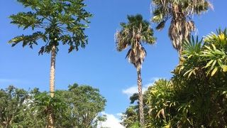 パイナップル栽培の中心地