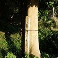 写真:将門の井戸