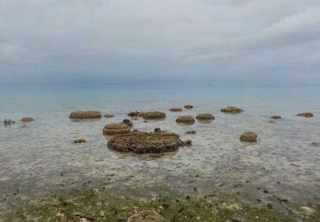 アンツ環礁