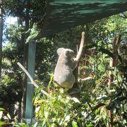 コアラを抱っこ!