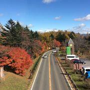 国道と 温泉街までの紅葉が綺麗でした。