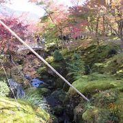 紅葉の苔庭は今(11月)が見ごろでした。