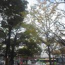 タワーホール船堀 タワー展望室