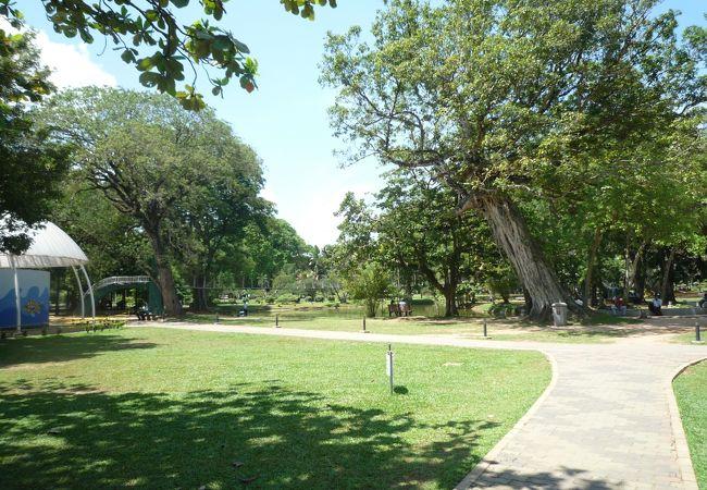 緑豊かな大きな公園