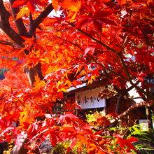 お庭の紅葉が綺麗でした