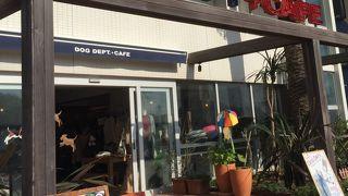 ドッグ デプト プラス カフェ 湘南江ノ島店