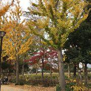 紅葉 と鴨