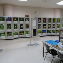 資料館内展示物