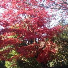 お鷹の道遊歩道の紅葉