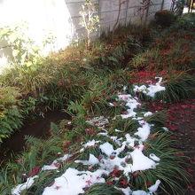 お鷹の道遊歩道の雪と落ち葉