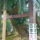 坂井神社の大ソテツ