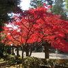 天覧山のついでに能仁寺の紅葉を見た