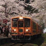 桜のトンネルを走り抜ける走れメロス号