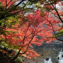 橋の上から見下ろす紅葉。