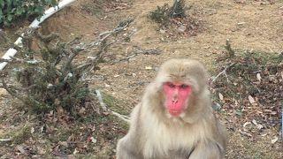 サルがいる場所までの山登りがしんどい・・・。