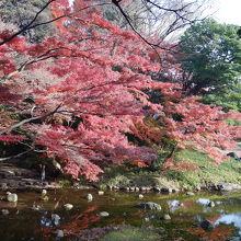 川沿いの紅葉が美しい。