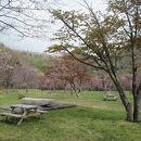 庶野さくら公園