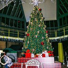 メインイベントのクリスマスツリー。
