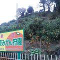 小坂みかん共同農園