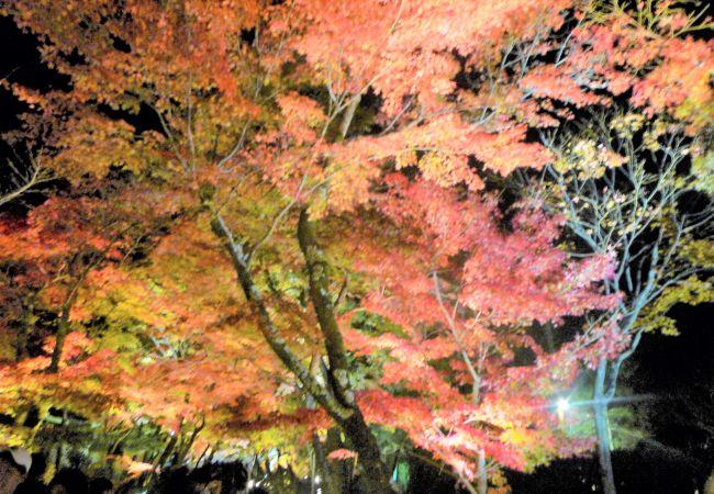 紅葉を眺めて、。