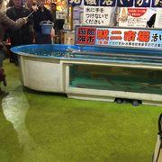 イカが釣れる